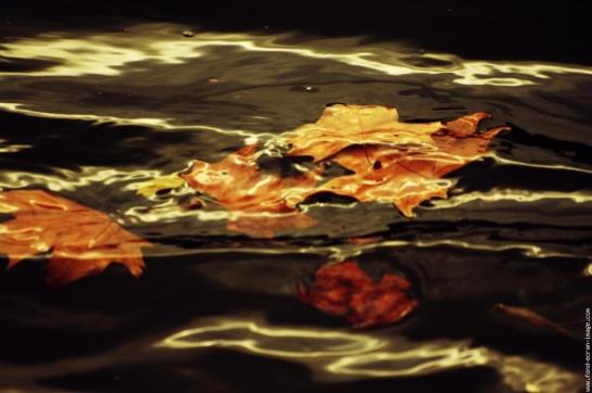 feuilles-mortes-1