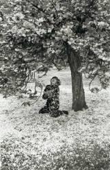 Boubat - Cerisier - Parc de Sceaux 1983