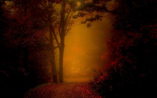dreamway-in-fog-forest