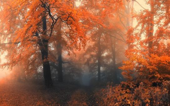 Forêt automne brouillard