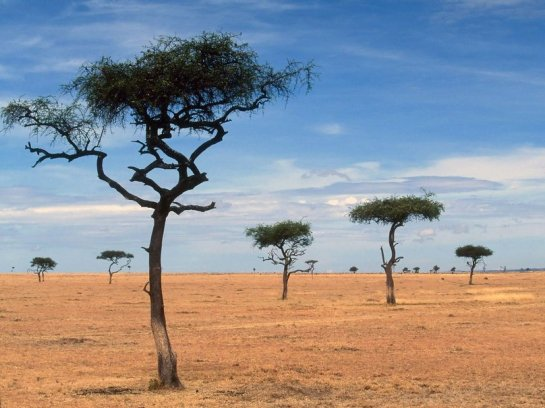 Scattered-acacia-trees-kenya-africa